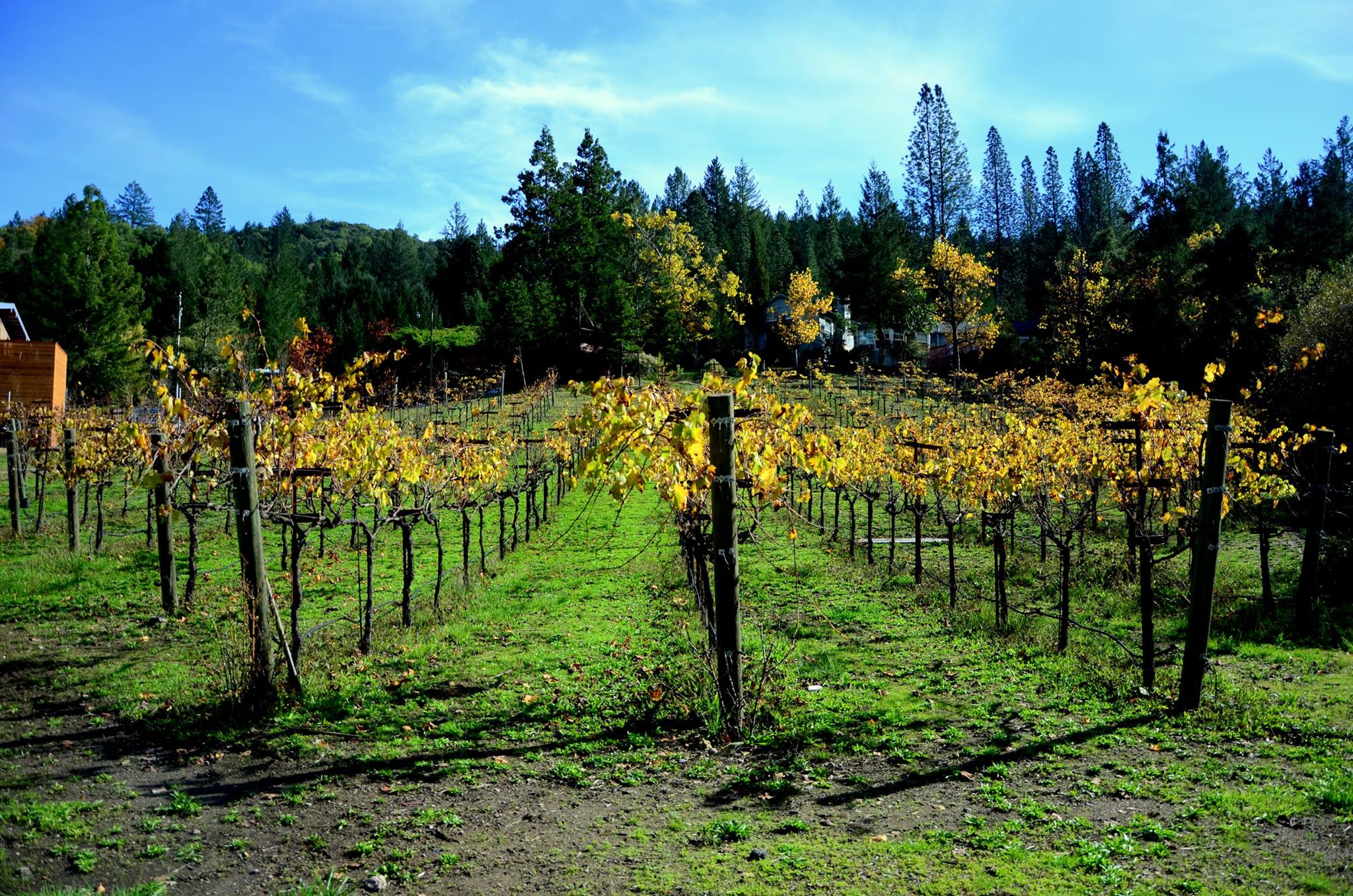 The camp's very own vineyard